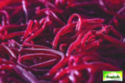 Betteraves rouges en lanières assaisonnées